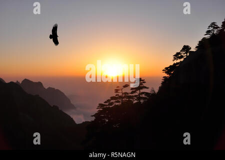 Silhouette eagle flying in the sky when sunset with freedom and pride over pine tree on the mountain. - Stock Photo