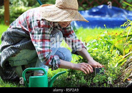 Plant care in the garden. Planting herbs on the flower beds. - Stock Photo
