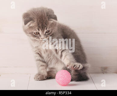 Gray striped kitten Scottish Fold is played with a pink ball, looks at it. - Stock Photo