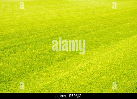 Perfect short cut green grass background - Stock Photo