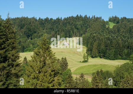 A wooden barn on the hill surrounded by fir tress. Picturesque view of a hill with fir tres forest and a old wooden barn and the beautiful blue sky, B - Stock Photo