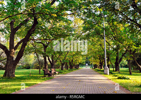 Autumn landscape - beautiful autumn walkway in park. Manchurian walnut alley. - Stock Photo