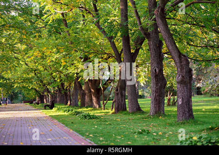 Sunny autumn day. autumn walkway in park. - Stock Photo