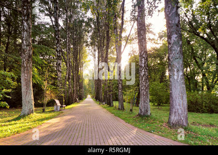 Beautiful autumn pathway in park. Old high birch trees - Stock Photo