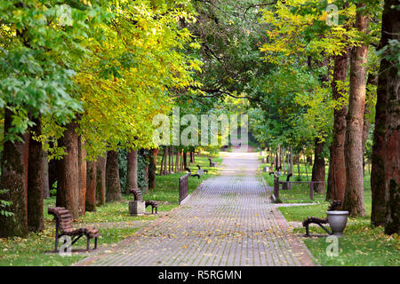 Autumn landscape – benches on a beautiful autumn walkway in park. Maple alley. - Stock Photo
