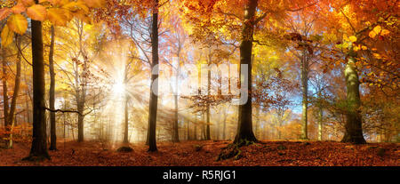 the sun shines through fog in a golden forest in autumn - Stock Photo