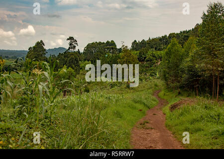 village track near Bogodi, Uganda, Africa - Stock Photo