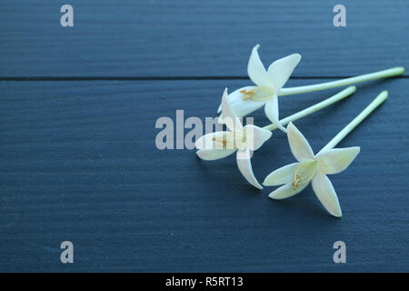 Closed up three beautiful white blooming Millingtonia flowers on dark blue wooden table, with free space for text and design - Stock Photo