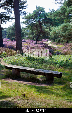 Bench on an idyllic place in a heather landscape - Stock Photo