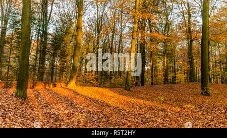 Forest in National Park de Hoge Veluwe in the Netherlands in beautiful golden autumn colours and sunbeams just before sunset during golden hour - Stock Photo