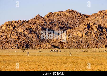 desert mountain namibia landscape springbok namib - Stock Photo