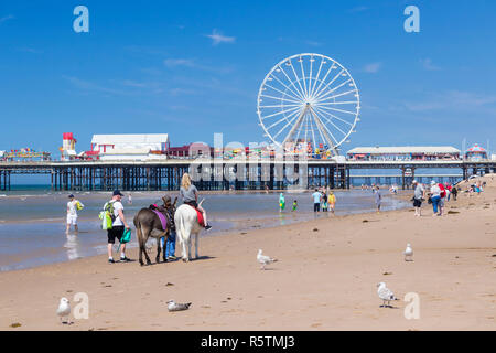 Blackpool uk Donkey rides on the beach in front of the Ferris wheel on the central pier Blackpool Lancashire England UK GB Europe - Stock Photo