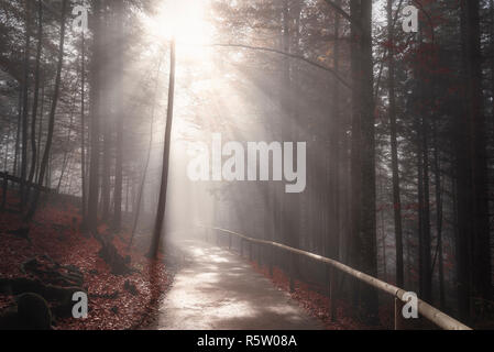 Sun rays over forest road in autumn decor - Stock Photo