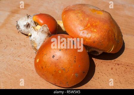 Raw suillus slippery jack picked bolete fungi mushrooms closeup on wooden board - Stock Photo