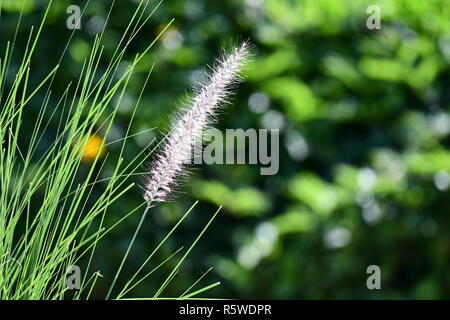 Wild flowers and Thistle on the mountains of Cyprus - Stock Photo