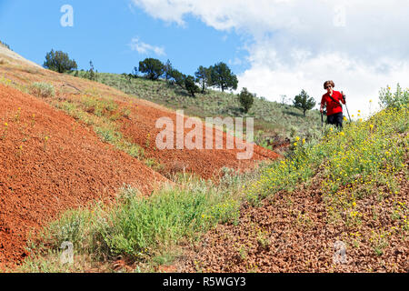 42,887.03081 woman hiking among yellow Golden Bee Plants (Cleome platyarpa) in the Oregon high desert with red sand hills, USA - Stock Photo