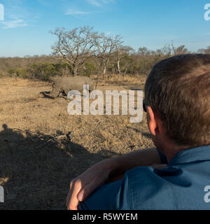 Tourist and watching a white rhinoceros from a jeep in the Kruger National Park, South Africa - Stock Photo