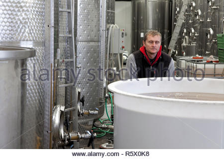 Worker in wine production transports a big plastic container full of wine. Stainless steel tanks for a fermentation on background. - Stock Photo