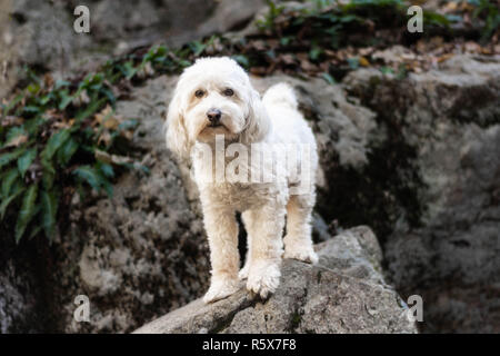 Dog standing on rock outdoors in park - Stock Photo