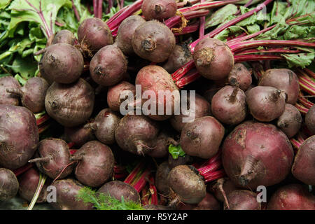Red beets with tops on farmer's market - Stock Photo
