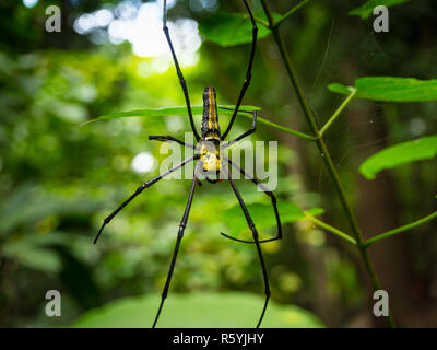Spider on spider web in the forest - Stock Photo