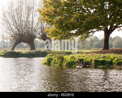 two mallards perched on wood on lake surface scene - Stock Photo