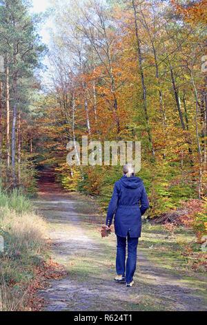 autumn walk in the schwetzinger hardtwald near walldorf - Stock Photo