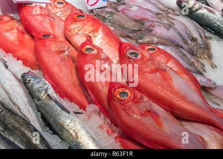 Kaiserbarsche und andere Fisch auf einem Markt in Madrid - Stock Photo