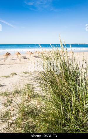 palm leaf beach umbrellas on a deserted beach seen from a dune, alvor, algarve, portugal - Stock Photo
