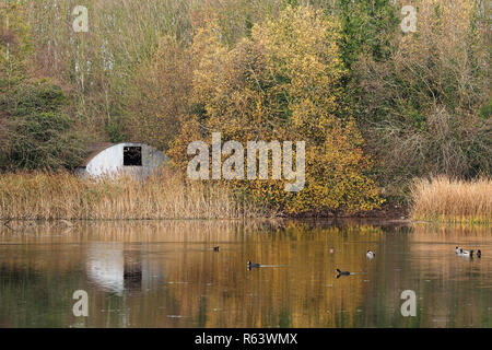 Mallard Ducks and Coots swimming near the boathouse at Rockwell College Lake, Cashel, Tipperary, Ireland - Stock Photo
