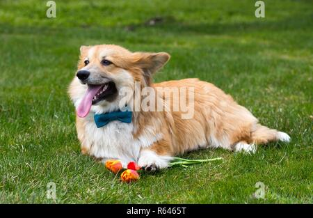 dog with the flower lying on a grass - Stock Photo