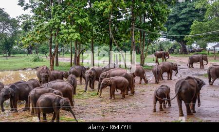 Elefanten im Udawalawe Nationalpark auf Sri Lanka - Stock Photo
