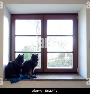 Two black Cats on the Windowsill - Stock Photo