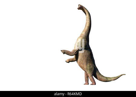Brachiosaurus altithorax from the Late Jurassic in action (3d illustration isolated on white background) - Stock Photo