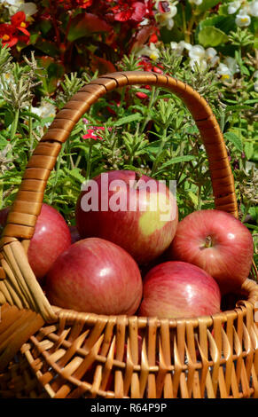 Red aples in basket - Stock Photo
