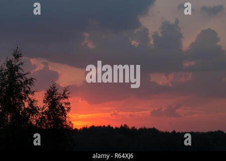 Mystical purplish red sunset over the dark silhouette of city forest - Stock Photo
