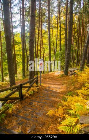 Pine trees in Sierra del Rincon. Montejo de la Sierra, Madrid province, Spain. - Stock Photo