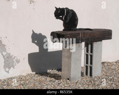 A back cat throwing a black shadow on a wall as it sits on a makeshift bench outside a village house in southern France - Stock Photo