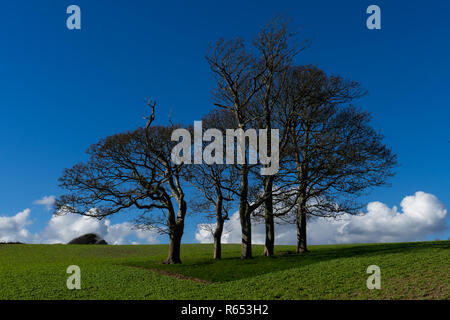 Blue sky clouds in the background, trees without leaves and green fields - Stock Photo