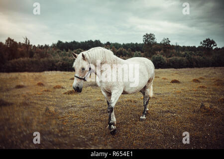 White horse with freckles - Stock Photo