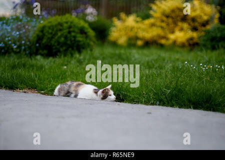 A cat on the hunt in the grass. A cat just before the attack - Stock Photo