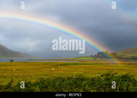 Colorful Rainbow Over Fresh Pasture With Sheep On The Isle Of Skye In Scotland - Stock Photo