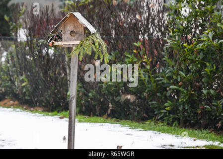 great spotted woodpecker near the birdhouse - Stock Photo