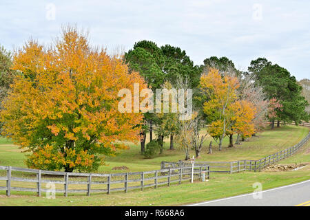 Trees changing into Fall colors behind a split rail fence along a country back road in South Alabama, USA. - Stock Photo