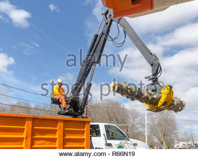Somerset, Massachusetts, USA - March 31, 2015: Boom operator moving section of trunk of downed Norway Spruce tree to truck for removal - Stock Photo