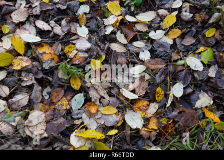 carpet of dried leaves in autumn in the undergrowth - Stock Photo