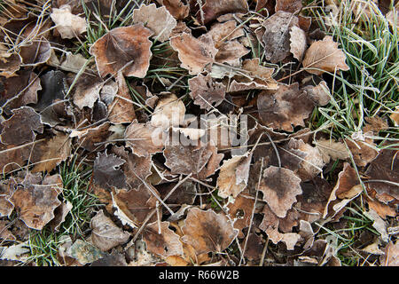 carpet of dried leaves colored in autumn in the undergrowth - Stock Photo