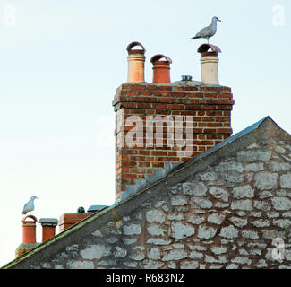 Portland, Dorset, UK. 4th December 2018. Seagulls rest on rooftops in Fotuneswell, Isle of Portand Credit: stuart fretwell/Alamy Live News - Stock Photo
