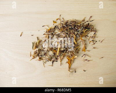 homegrown seeds of coneflower flowers - Stock Photo