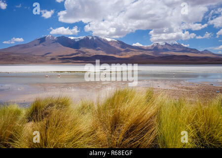Laguna Honda in sud Lipez Altiplano reserva, Bolivia - Stock Photo